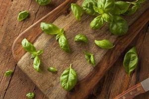 manjericão verde orgânico foto
