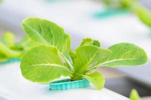 hidroponia vegetal