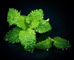 folhas de hortelã foto