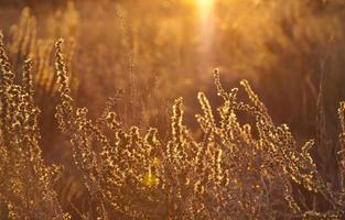 close-up do arbusto dourado foto