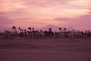 pôr do sol no deserto - silhuetas de palmeiras