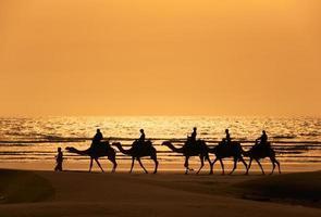 silhueta de dromedário e turistas ao pôr do sol foto