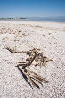 deserto de carcaça de pássaro morto foto