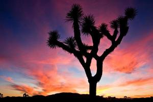 pôr do sol sobre o parque nacional de joshua tree, califórnia, eua.