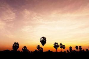 árvore plam na hora do crepúsculo foto