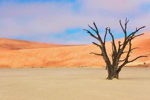 árvores e paisagem do deserto de vlei morto, namíbia
