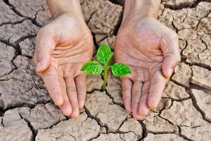 mãos segurando uma árvore crescendo em terra rachada