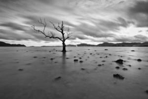 árvore da morte na praia em preto e branco