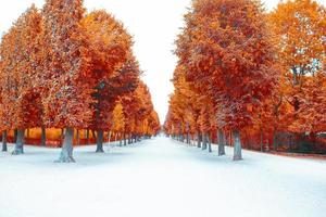 floresta de outono, floresta em cores de outono