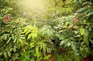 floresta de fadas