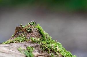 vida na floresta foto