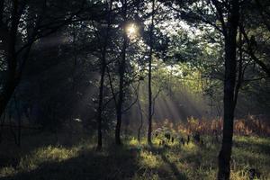clareira na floresta foto
