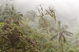floresta nublada