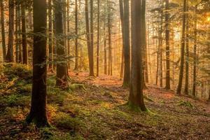 floresta Negra