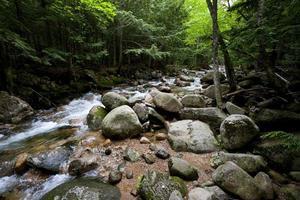 riacho e floresta