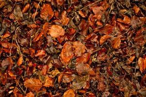 folhas da floresta foto