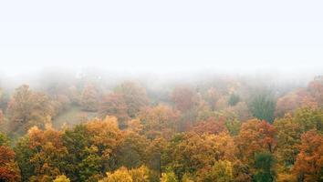 floresta nublada de outono