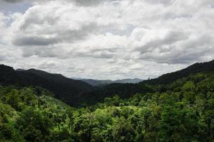 floresta de chiang mai