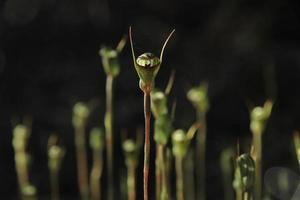 floresta de orquídeas verdes