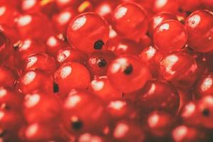 frutas frescas da floresta