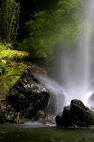 cachoeira, riacho e floresta
