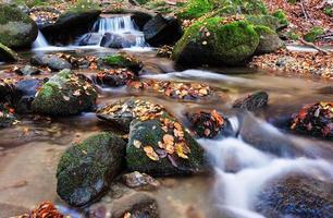 riacho na floresta profunda foto