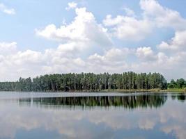 reflexos da floresta foto