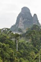 floresta na montanha foto