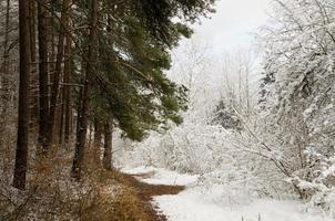 floresta de neve foto