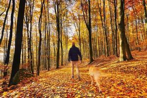 caminhando na floresta de outono