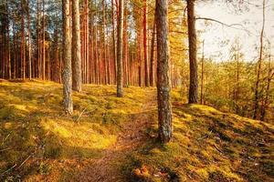 pôr do sol na floresta de outono