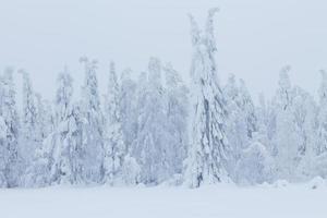 floresta e campos de neve