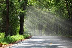 estrada da floresta sob os raios de sol do sol.