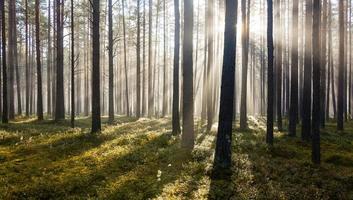 manhã na floresta