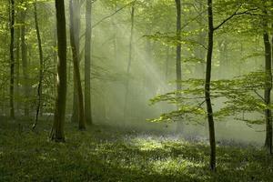 floresta de reitor foto