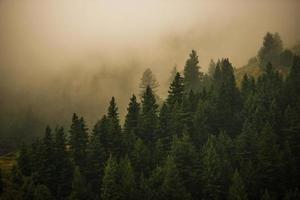 floresta nebulosa do Colorado