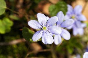 flores da primavera . floresta