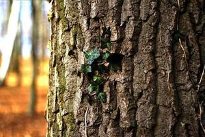 árvore na floresta