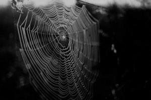orvalho de teia de aranha na floresta foto