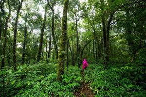 caminhada na floresta tropical foto