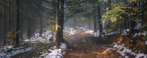estrada da floresta no nevoeiro
