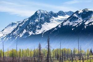 montanhas e floresta com nevoeiro