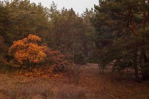 outono na floresta. pôr do sol