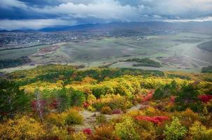 bela vista da floresta foto