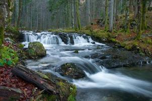 riacho na floresta outonal
