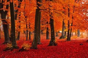 folhas vermelhas na floresta foto