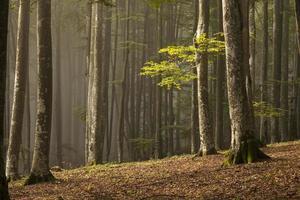 dia de outono na floresta foto