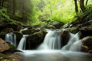 riacho fluindo pela floresta