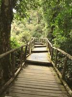 a passarela de madeira na floresta