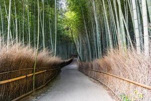 caminho da floresta de bambu no japão foto